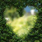 Piękny ,a także schludny zieleniec to zasługa wielu godzin spędzonych  w jego zaciszu w trakcie jego pielegnacji.
